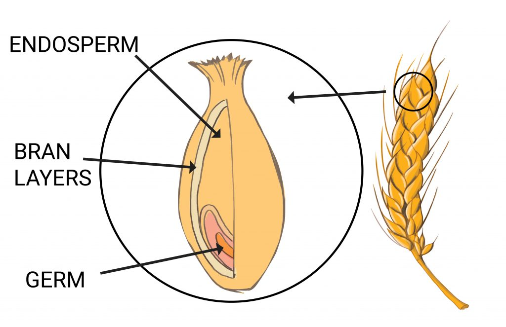 Wheat Diagram